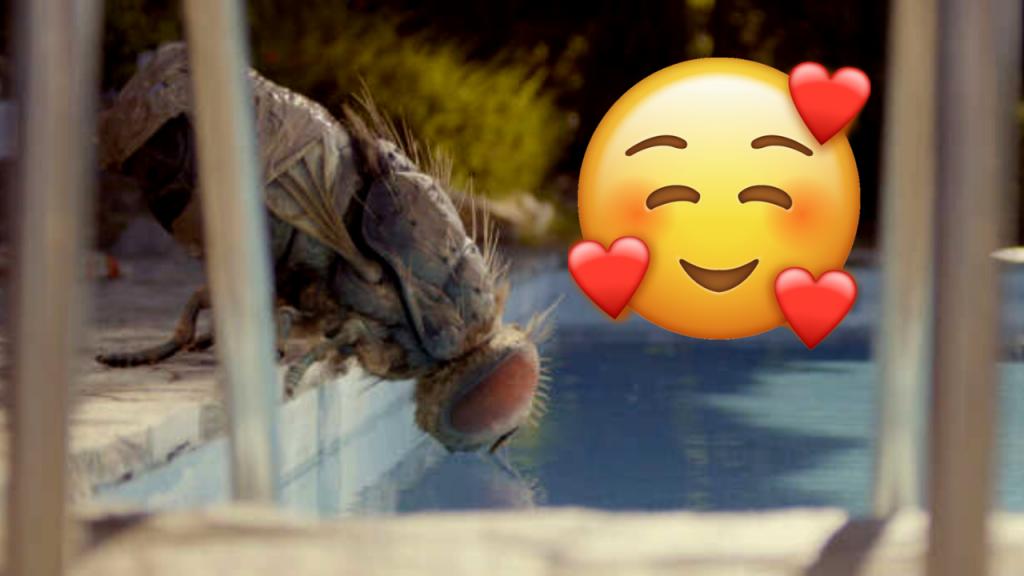 L'adoption de mouches géantes a explosé depuis la sortie du film Mandibules